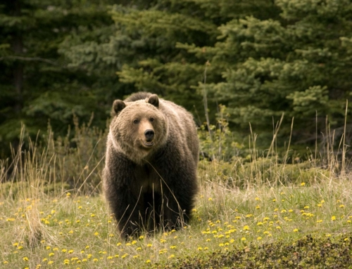 An important message from the DNR about The Bear Essentials