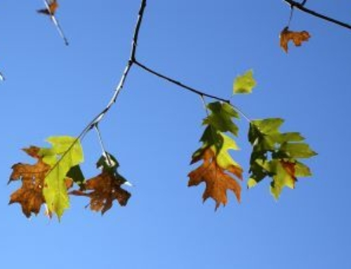 See important message from the DNR about Oak Wilt.